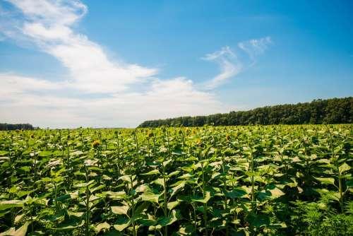 Nature Sky Green Clouds Landscape Atmosphere Farm