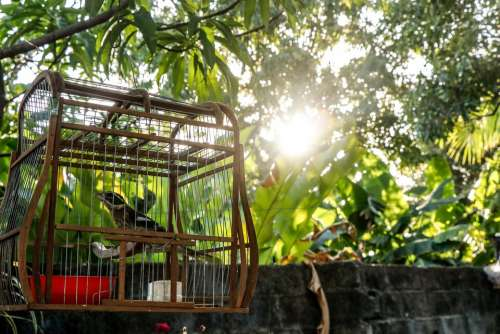 Nature Cage Pet Pen Plumage Beautiful Zoo