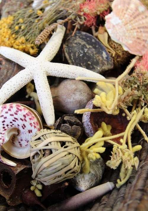 Nature Starfish Shell Beach Sea Potpourri