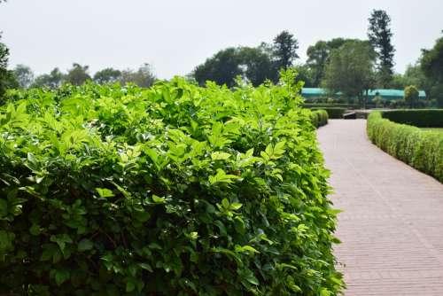 Nature Haze Landscape Outdoors