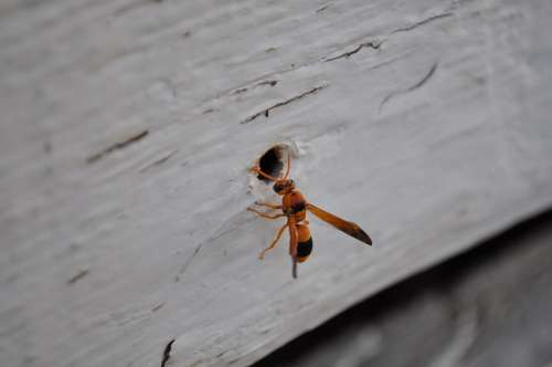 Nature Insect Animal Spring Hornet Wasps Wood