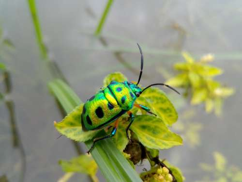 Nature Beetle Bug Insects Wonderful