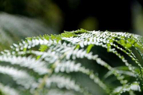 Nature Green Forest Forests Summer Landscape