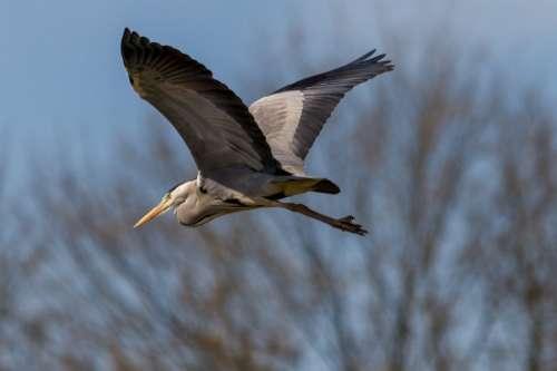 Nature Landscape Lake Birds Wildlife Grey Heron