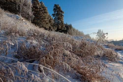 Nature Forest Winter Snow Leann Frost Landscape