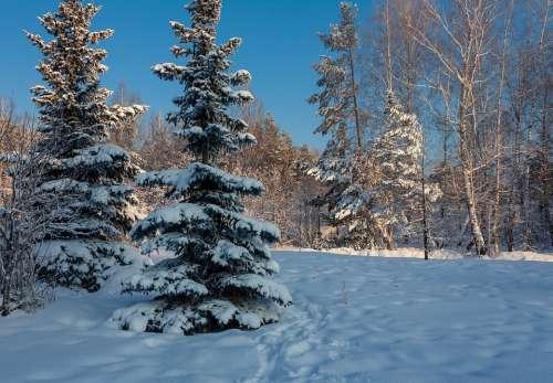 Nature Forest Winter Trees Snow Landscape Mystic