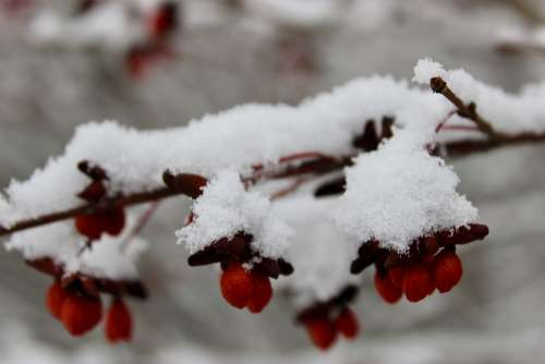 Nature Snow Winter Branch