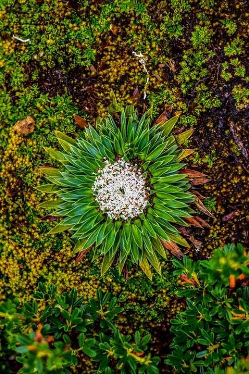 Nature Flower Garden Plant