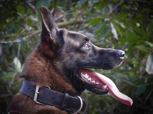 Nature Dog Animal Pet