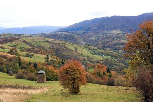 Nature Autumn Mountains Forest Trees Foliage