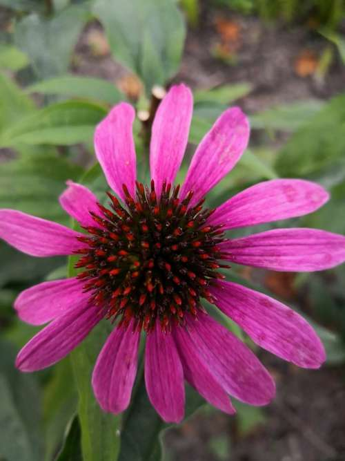 Nature Summer Flowers