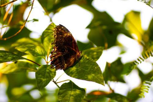 Nature Insect Butterfly Nymphalidae
