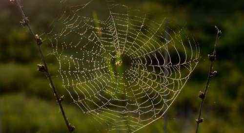 Nature Spider Insect Arachnids Light Thread