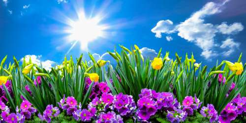Nature Landscape Spring Flowers Sky Clouds Sun