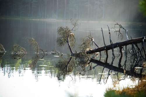 Nature Forest Pond Finnish Tree Pine Storm