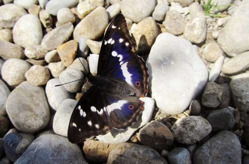 Nature Butterfly Dark Blue White Black Stones