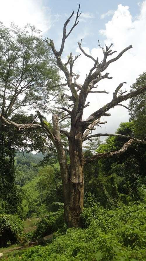 Nature Tree Green
