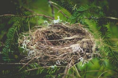 Nest Empty Home Animal Bird Nest Straw Wildlife