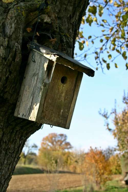 Nesting Box Tree Plant Aviary Bird Feeder Breed