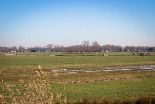 Netherlands Polder Pasture Countryside Horizon