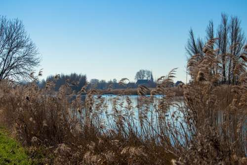 Netherlands Reed Water Landscape Nature Polder