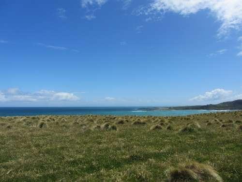 New Zealand Nature Blue Green Nz Grass Landscape