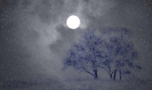 Night Wintry Trees Snow Moon Snowfall Snow Flurry