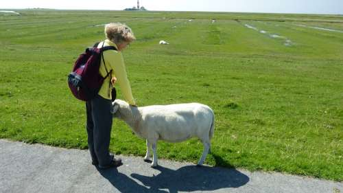 North Sea Wadden Sea Animal World Nature