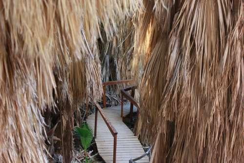 Oasis The Path Footbridge Palm Trees