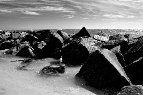 Ocean Jetty Beach Rocks Inlet Monochrome Egret