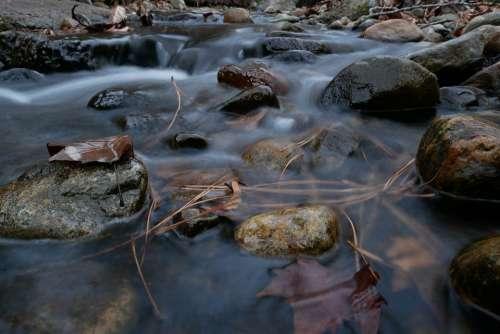 Okanagan Nature Fall Creek Leaves Needles Glisten