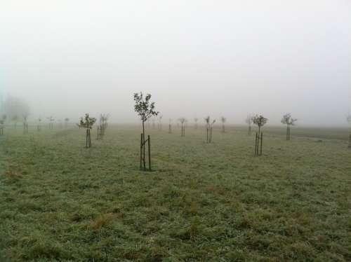 Orchard November Fog Plant Trees Germany Autumn
