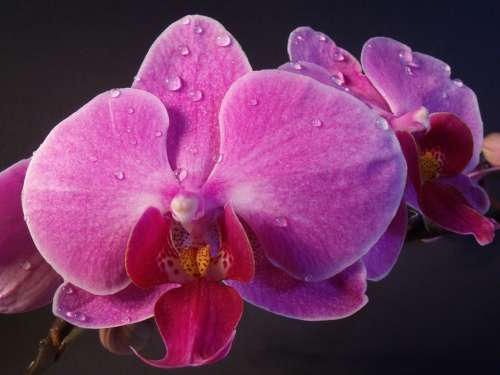 Orchid Flower Blossom Bloom Plant Nature Close Up
