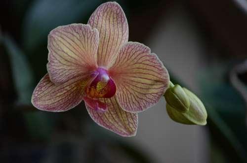 Orchid Tropical Coloring Flora Closeup