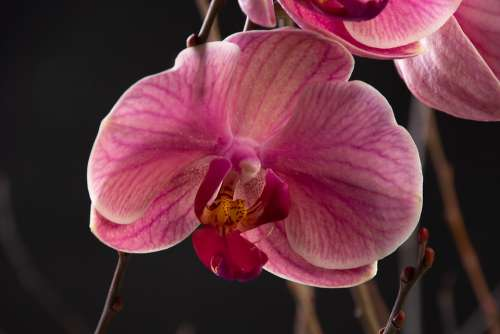 Orchid Flower Nature Tropical