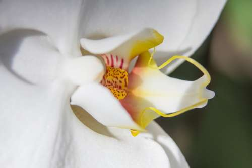 Orchid White Phalaenopsis Flower Butterfly Orchid