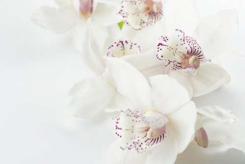 Orchids Flowers Purple Exotic Botany Petals Petal