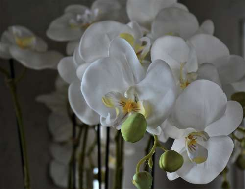 Orchids Flowers Flower Plant Houseplants