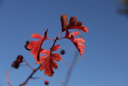 Otoño Autumn Leaves Season September Colorful