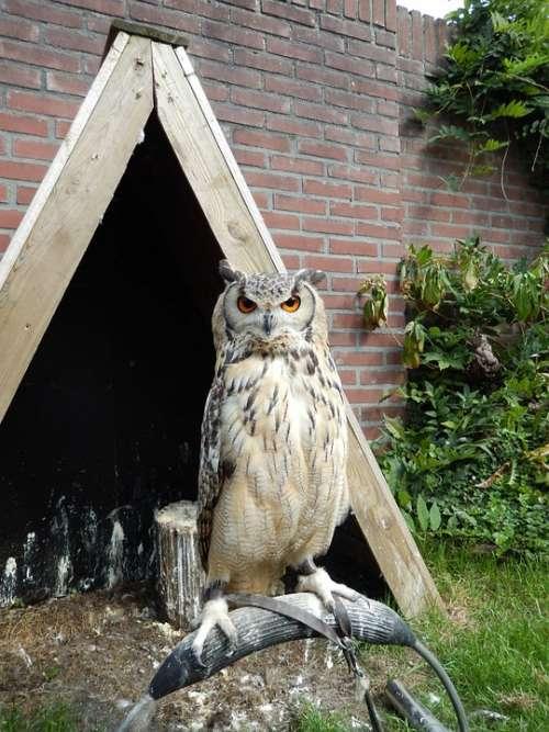 Owl Night Bird Train Carnivore On Stick