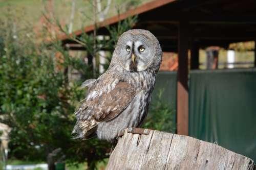 Owl Bird Night Raptor