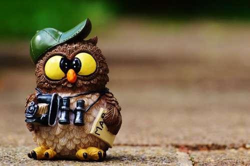 Owl Photographer Photograph Tourist Binoculars