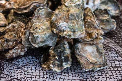 Oyster Shell Market Food Seafood Marine Clam
