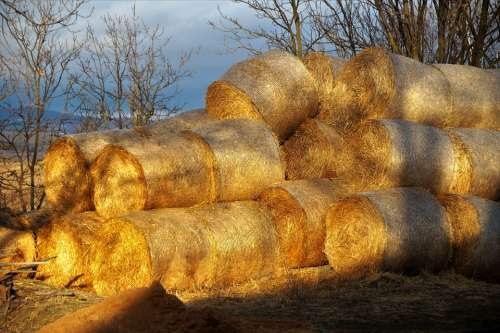 Packages Hay Straw Agriculture Stacked Bal