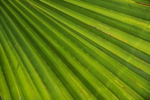 Palm Leaf James Palm Tree Close Up Beach