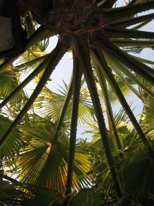 Palm Tree Tropical Summer Leaf Plant