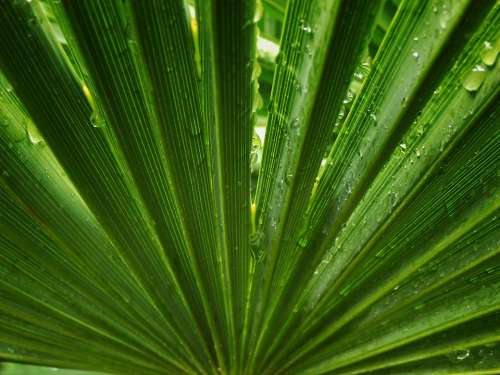Palm Tree Leaf Symmetry Palms Leaves Rain Drops