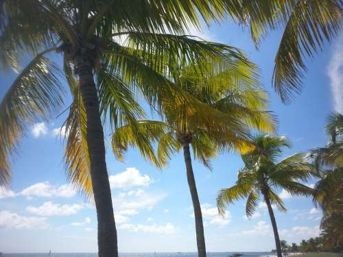 Palm Tree Tropical Key West Paradise Ocean Sea