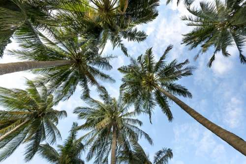 Palm Trees Sky Palms Background Summer Tropical