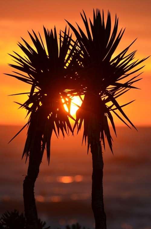 Palm Trees Palms Exotic Sunset Korfu Ocean
